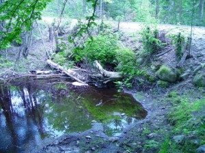 Clogged culverts, Rolfe Brook at 4th Lake Rd, 2006