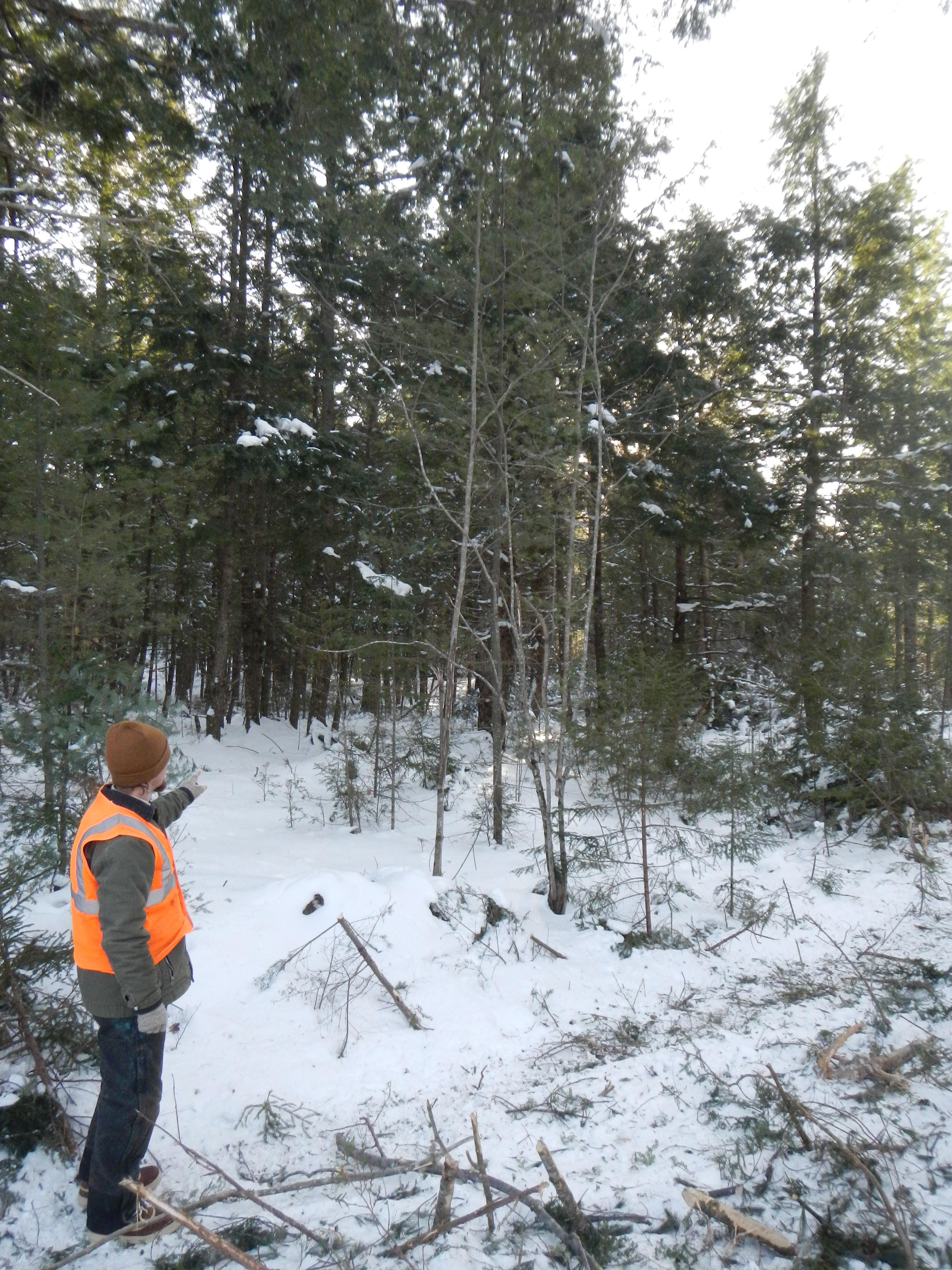 Kyle Burdick - Community Forest Manager