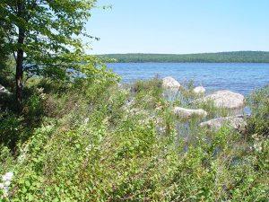 Pocumcus Lake